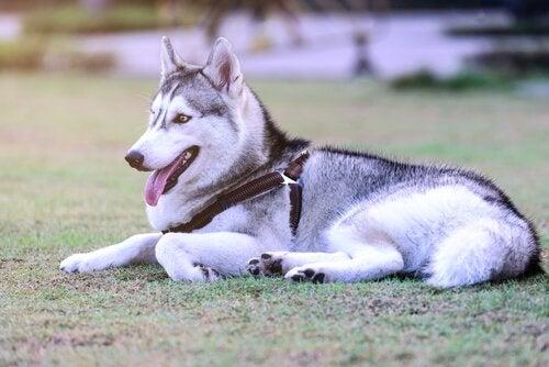 犬が教えてくれる「平和に過ごすこと」とは?