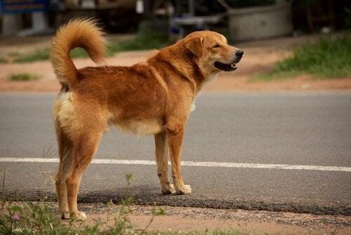 アスファルトに立つ犬 罰金