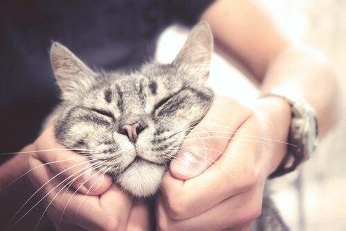 顔をマッサージしてもらう猫