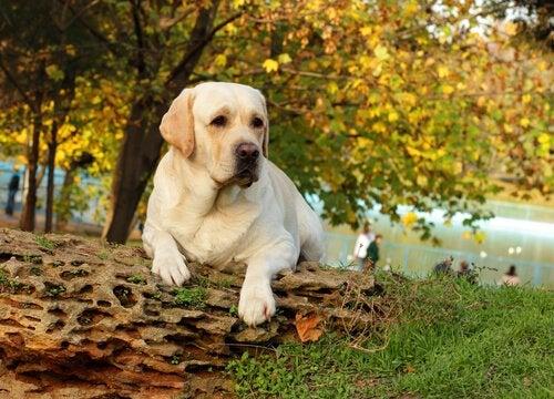 丸太の上で一休みする犬
