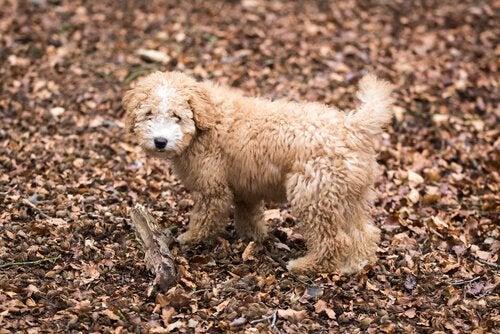落ち葉の中佇む犬