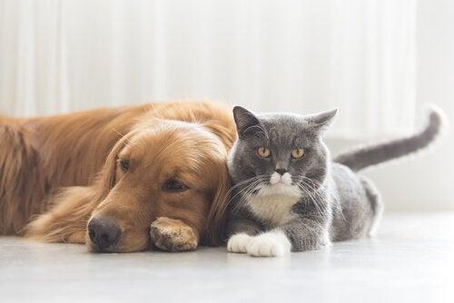 犬と猫に迫る7つの危険な病気