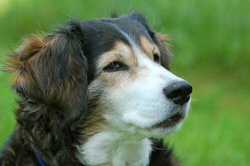 飼い犬が喉にものを詰まらせたら