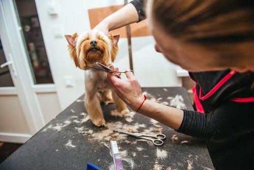 夏場に愛犬の毛を切るのは正しいこと?