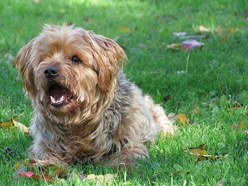 犬の吠え方の種類とその意味