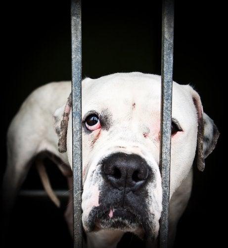 動物虐待2 動物虐待を通報する