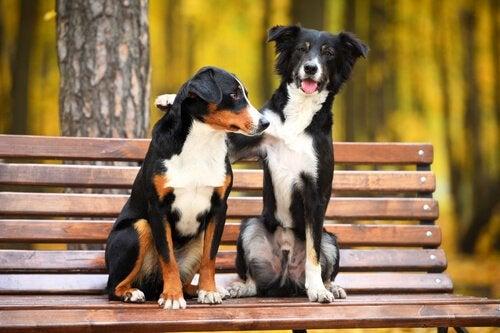 ベンチに座る2匹の犬 悪さをするのを防ぐ