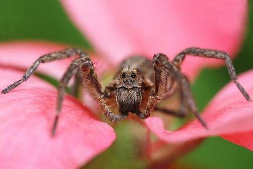 花の上のクモ 最も危険なクモ