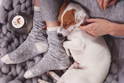 飼い主の足元で寝る犬