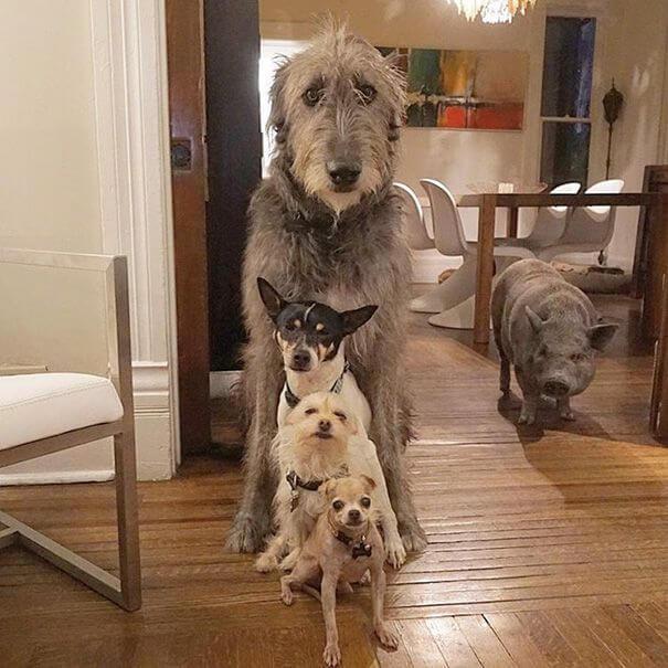 異なるサイズの犬達