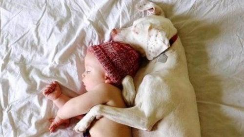 虐待を受けた犬に寄り添う赤ちゃん
