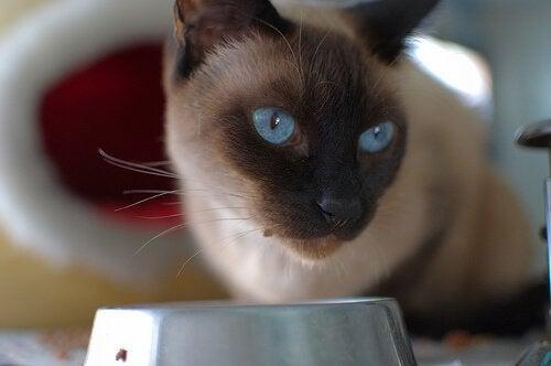猫のための手作りごはんレシピ