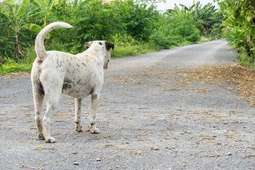 道の先を見つめる犬