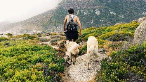 山で飼い主について回る犬