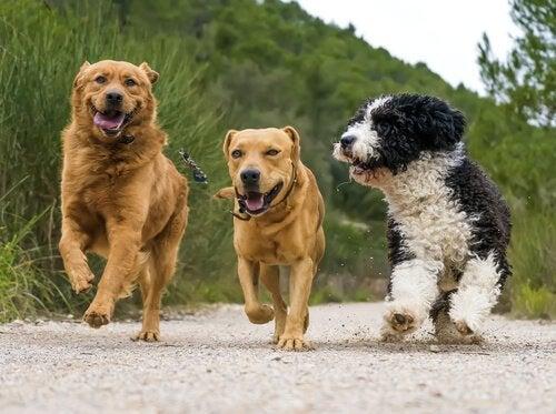 連なって歩く犬