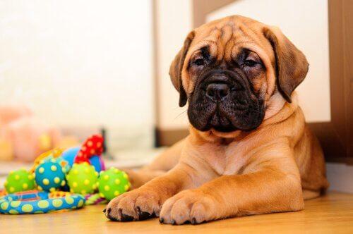 犬とおもちゃ ペット 一年
