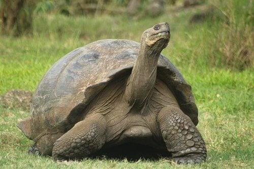 動物界の長寿:一番長生きする動物は?