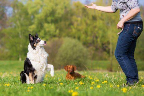 愛犬に従順さを身に付けるための基本的なエクササイズ