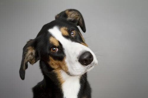 頭を傾げる犬