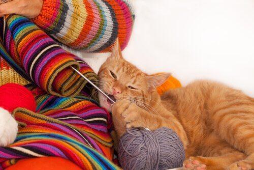 毛糸で遊ぶ猫 猫が服を噛む