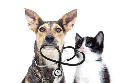 聴診器を持った犬と猫