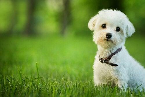 芝生に佇む白い犬 犬 魂 スピリチュアル 天国