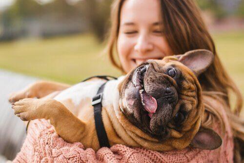 飼い主と遊ぶ犬 飼い主 必要な条件