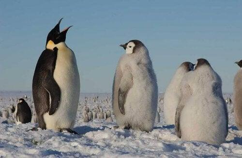 氷の上のペンギン