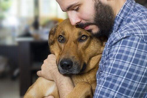 献身的に看病 犬   がん疼痛治療