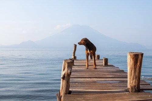 湖にいる犬