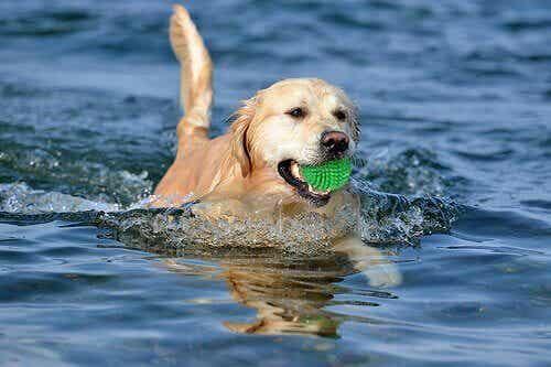 不安感ゼロ!投げたものを取りに行く遊びを犬に教える方法