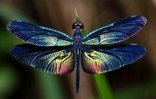 トンボ:美しい大きな羽を持つ昆虫について