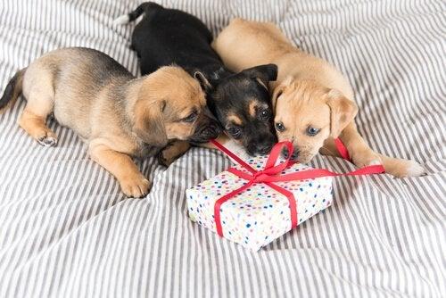 ペットへのプレゼントの選び方について