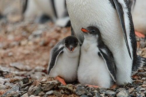 ペンギンを保護すること :環境保護キャンペーン