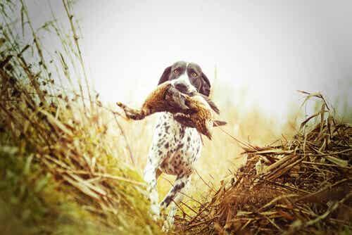 場面に応じて活躍する様々な狩猟犬
