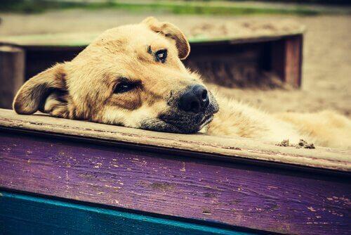 ベンチでうなだれる犬 迷子 犬 対処