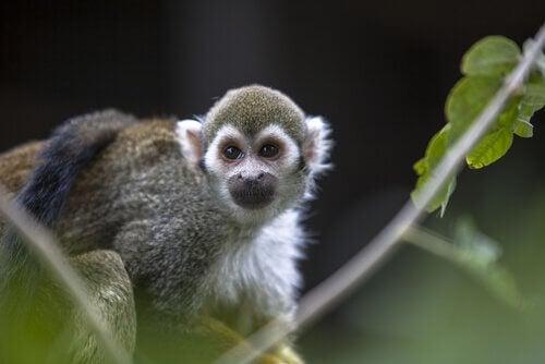中国十二支に出てくる動物 猿