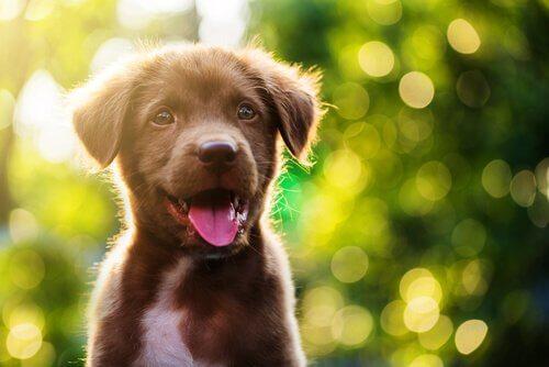 舌を出す子犬