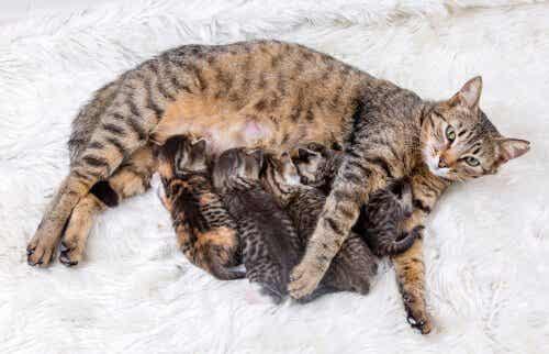 猫における避妊の重要性