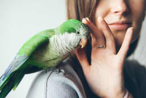 ペットの鳥の回虫駆除をしよう