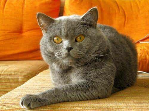 愛猫の行儀を良くする方法とは?