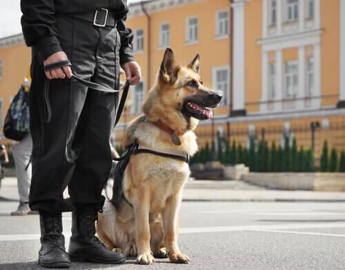 メスの警察犬 名前 警察犬