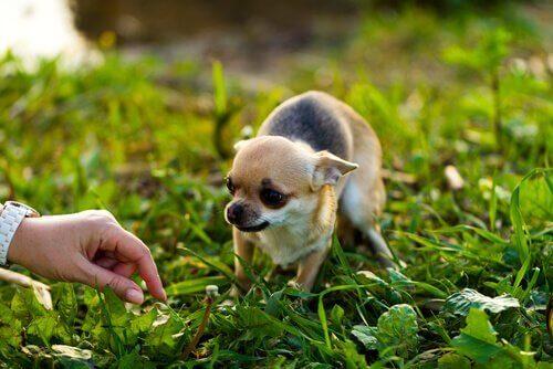 おびえている犬に近寄るために必要なことは?