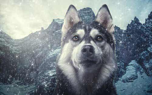 イヌの分類学:イヌとオオカミってどの位似ているの?