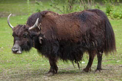 中国を代表する5種類の動物