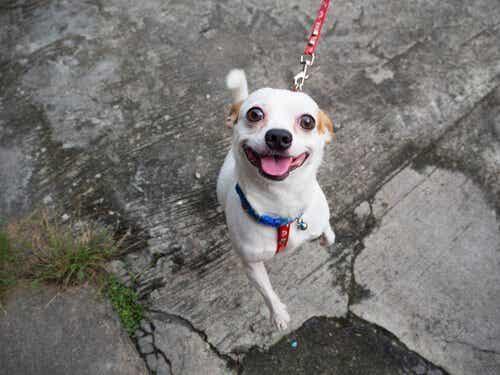 愛犬との散歩を楽しくする6つのコツを見てみよう!