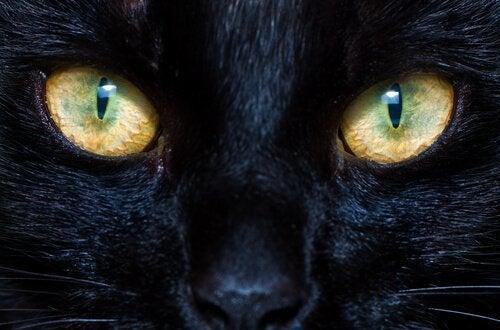 犬や猫の瞳孔はどんな仕組みで動いてるのだろう?