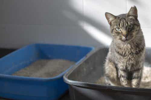 猫のトイレの臭い防ぐための対策:あなたの家は臭ってない?