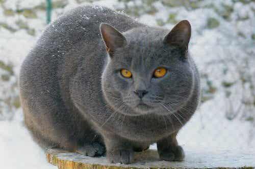 独特の魅力を持つ美しき短毛種の猫を見てみよう!