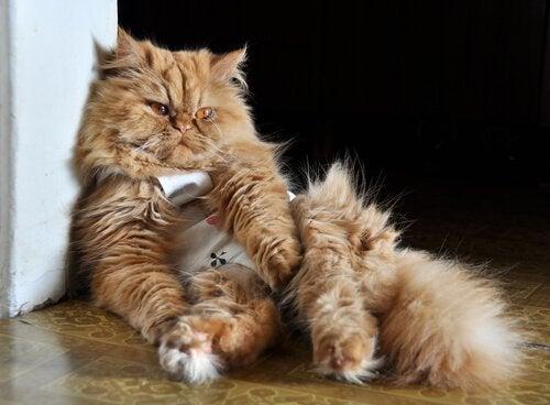 壁に寄りかかる病気の猫
